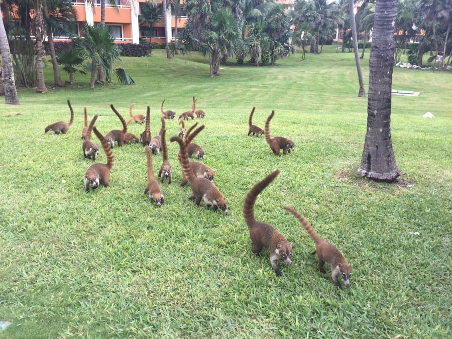 Животные Мексики