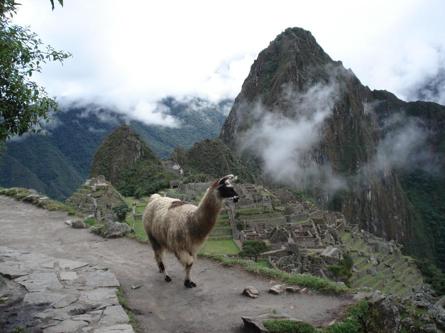 397 Лама над Мачу Пикчу