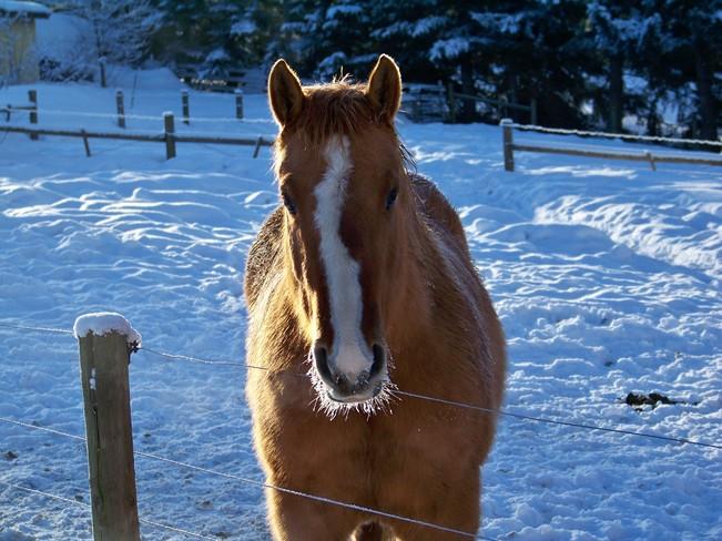 Лошадка при минусовой температуре