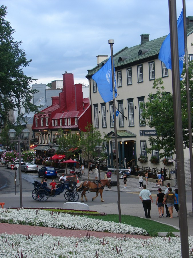 Quebec-City Horse