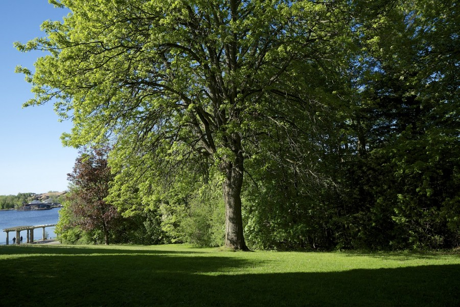 Eaton tree