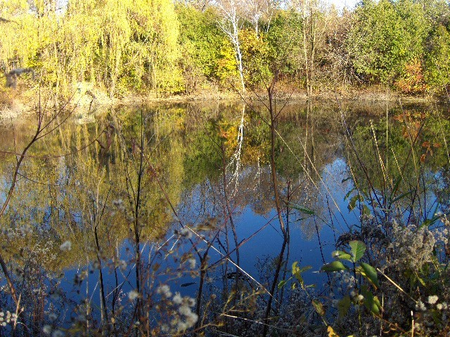 mont pond