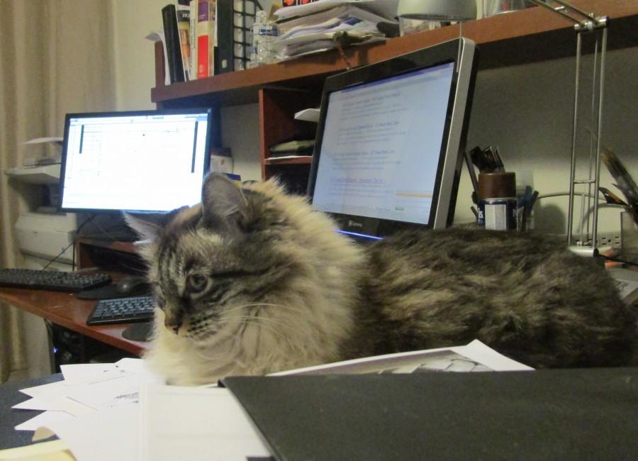 bosya in the office