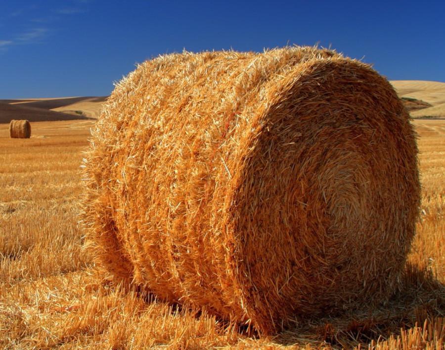 hay-bale 1.jpg