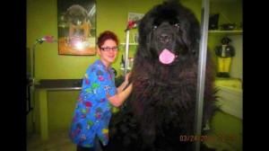 Newfoundland doggy.jpg