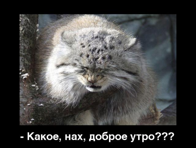 http://pics.livejournal.com/elshajkina/pic/0006p48s/s640x480
