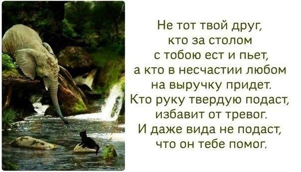 ТВОЙ ЧЕЛОВЕК
