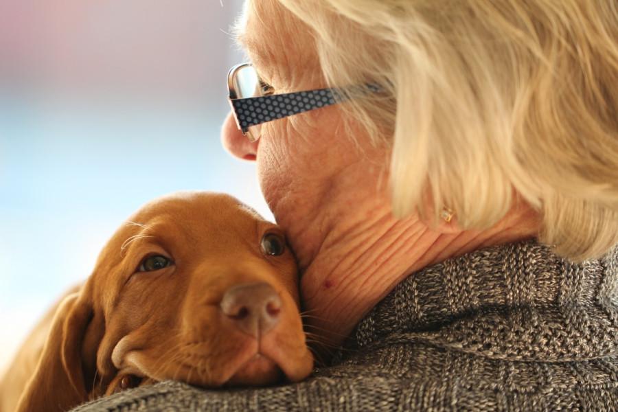 young_old_puppy_cute_love_dog_hug_vizsla-1176463.jpg!d