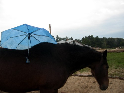 Гонг и зонт - lprokoni (1)