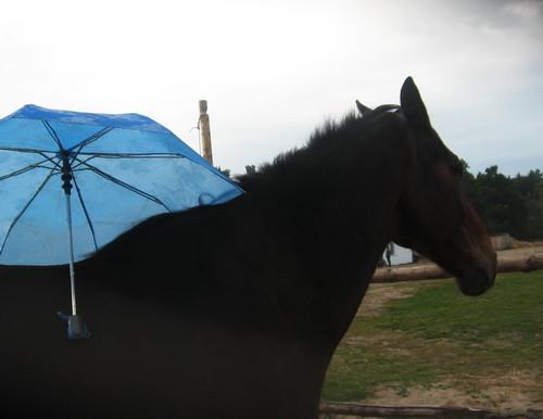 Гонг и зонт - lprokoni