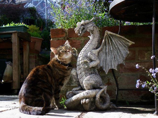 кот и дракон