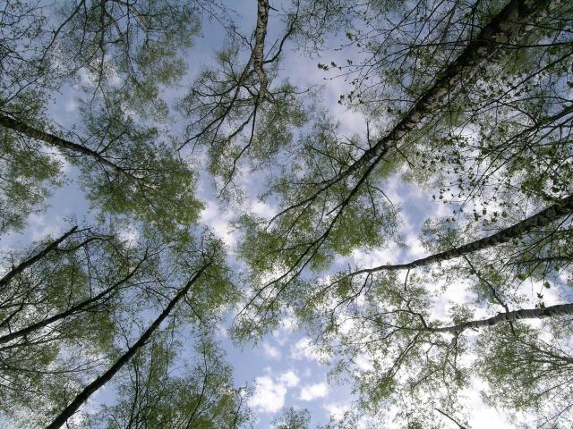 trees 1 may 2008