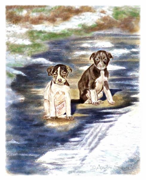 Два бездомных щенка