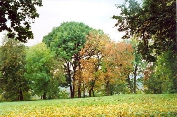 Веневитинов-парк