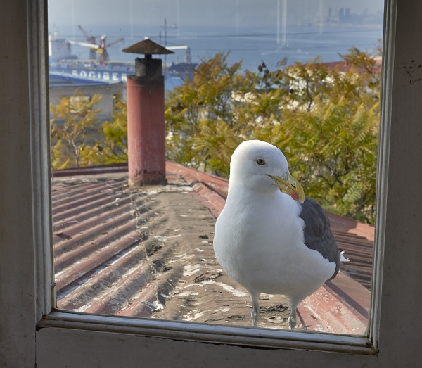 seagullroof