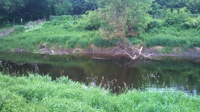 А тут, если приглядеться, по центру виден плывущий бобр. За ним по воде тянется характерный след.