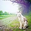 cat-in-nature.jpg