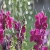 april_showers_2-1920x1200.jpg