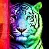 rainbow_tiger_10_by_tomboytigress.jpg