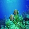 life_underwater_75.jpg