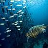 Animals-Underwater-Marine-life-.jpg