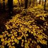 1321171014_YellowThings.jpg
