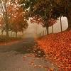 orange-leaf-autumn-season-widescreen-wallpaper-2.jpg