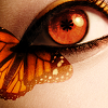 orange_butterfly_eye_by_crazy_kiwii.png