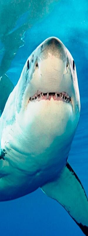 shark-1.jpg