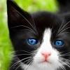 Cat19.jpg