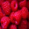Pro-Tips-to-Grow-Your-Own-Raspberries.jpg