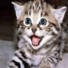 cute-cat-wallpapers.jpg