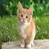 Beautiful Cats Hd Wallpapers_7.jpg