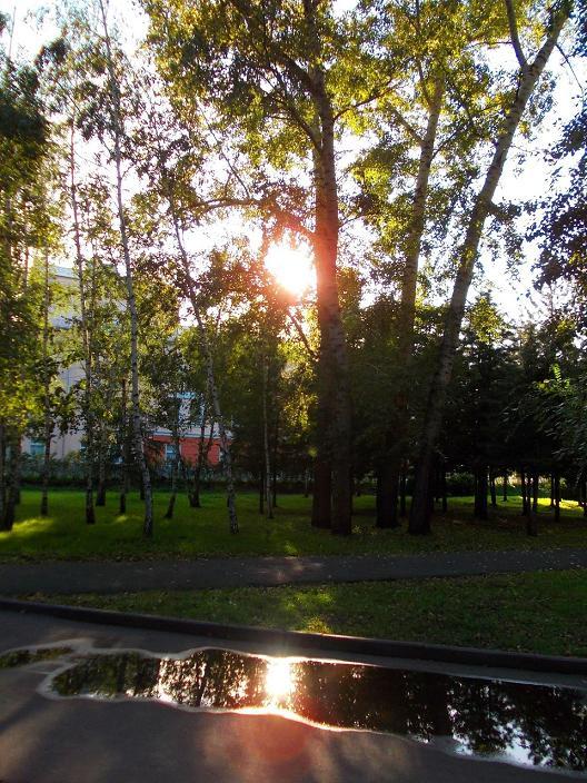 солнце в парке