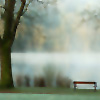 A foggy bench and tree beside a lake