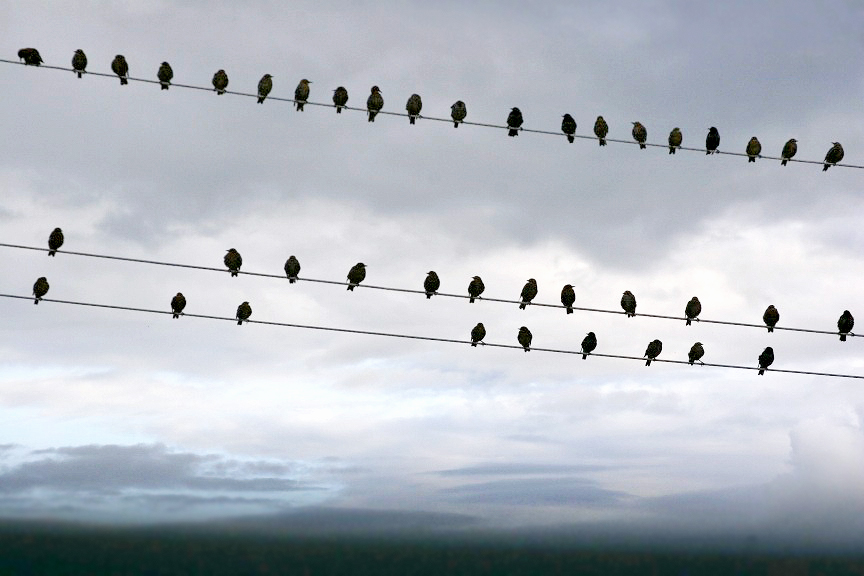 птички+