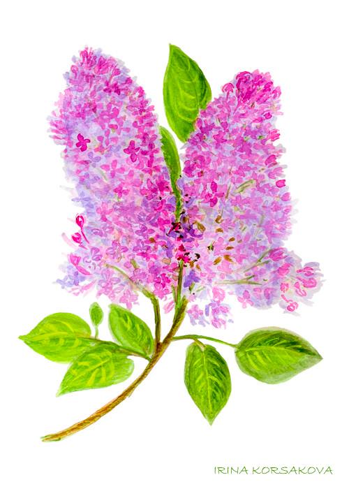 lilac-print-by-Irina-Korsakova