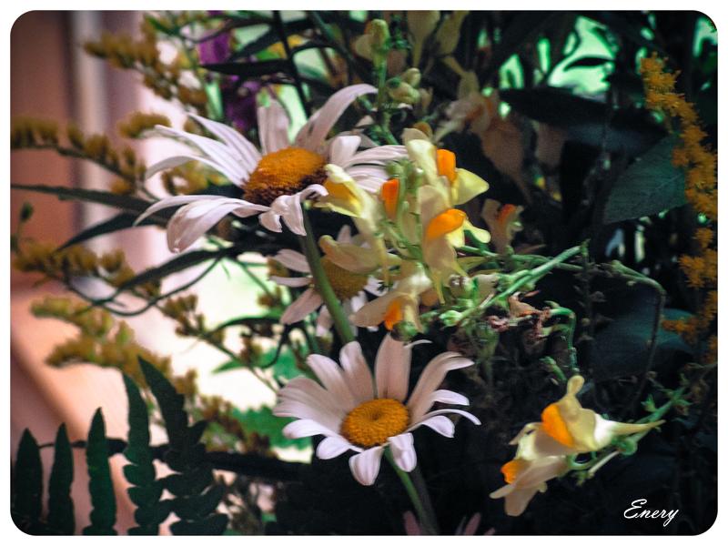 20110814-PICT0983