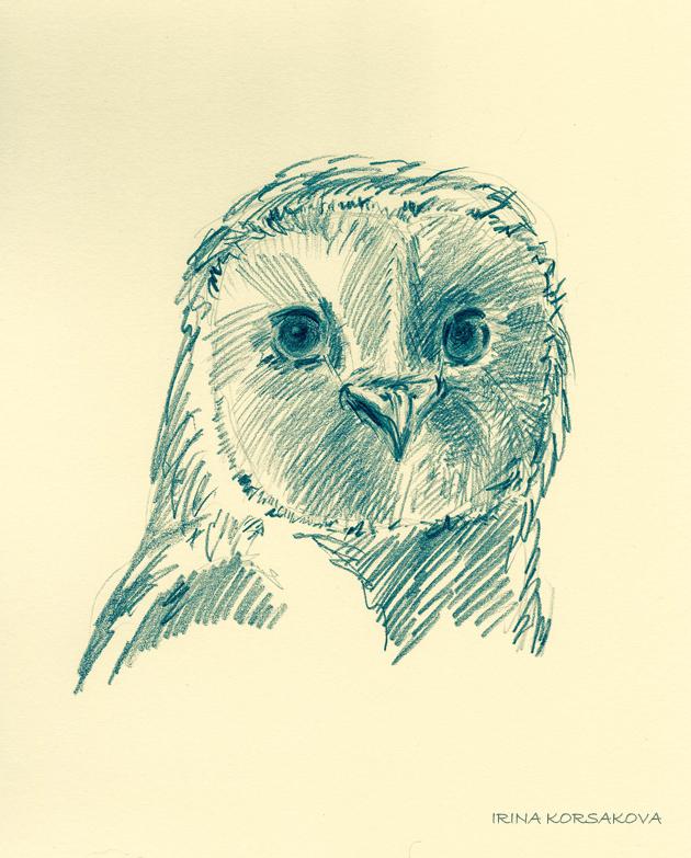 Owl-by-Irina-Korsakova
