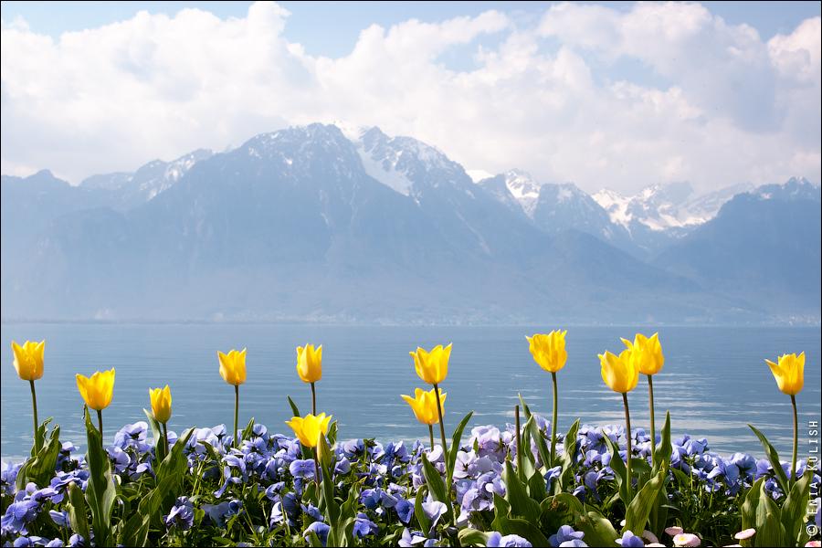 spring_montreux