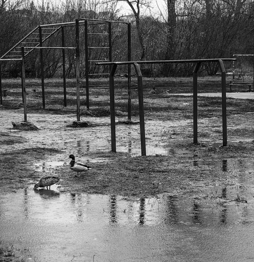 Но, утки прилетели -  весну не отменить.