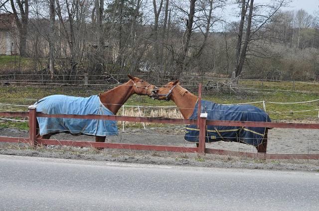 все мы немножечко лошади