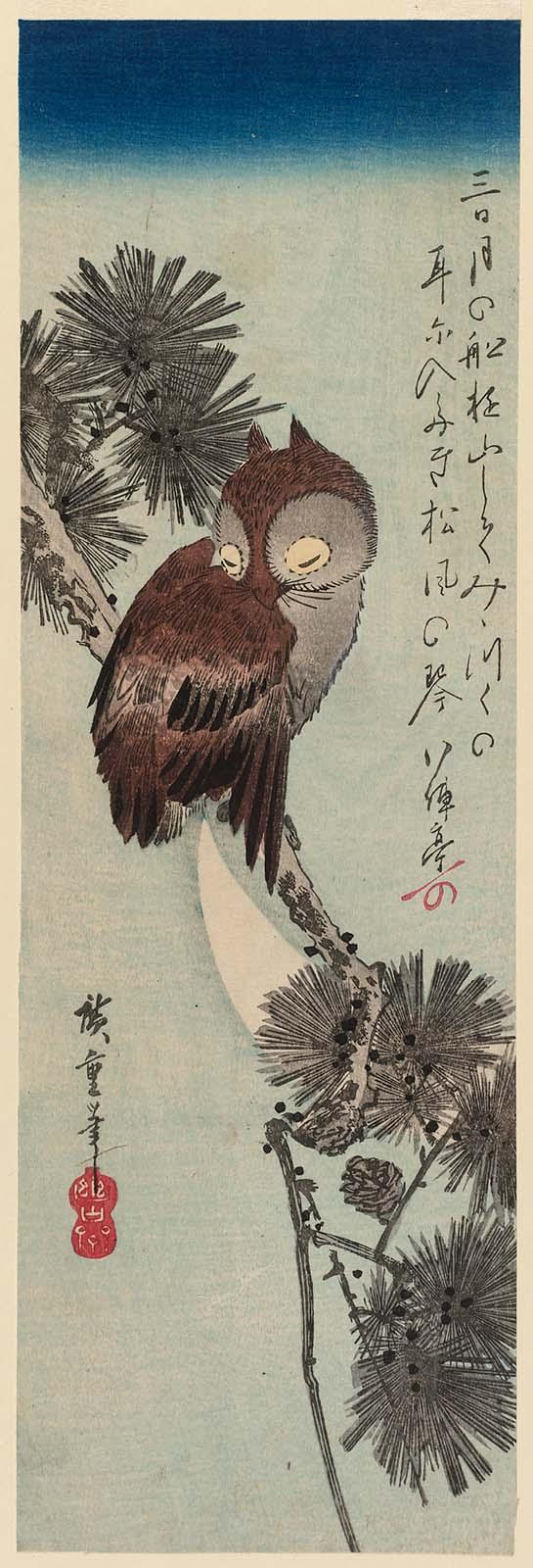 1_Маленькая рогатая сова в сосновом дереве.jpg