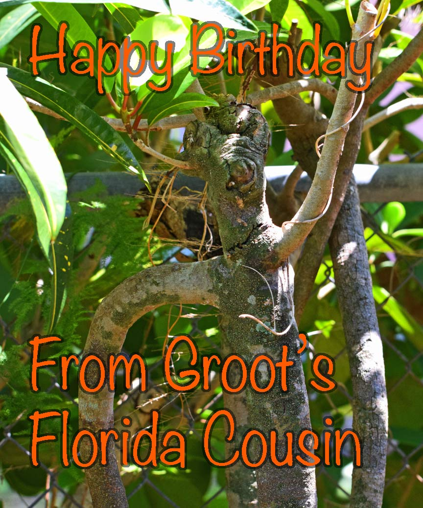 happy-birthday-Groot.jpg