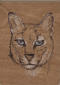 aug-4-Maple-African-Golden-Cat.jpg