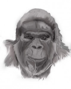 aug-8-gorilla.jpg