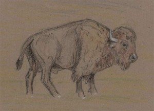 Aug-17-Crayon-Bison.jpg