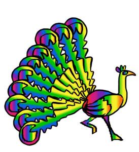 aug-18-rainbow-peacock.jpg