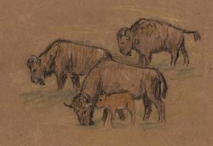 aug-19-crayon-bison.jpg