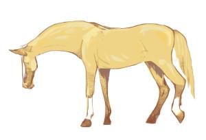 Aug-20-web-horse.jpg